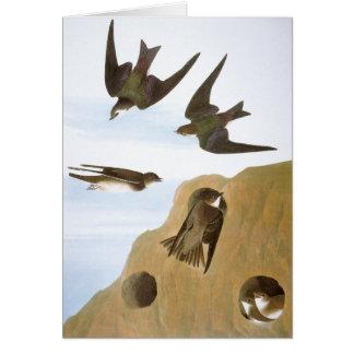 Cartão Audubon: Andorinhas