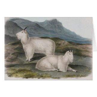 Cartão Audubon - cabra de montanha rochosa
