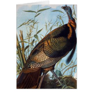 Cartão Audubon: Turquia selvagem