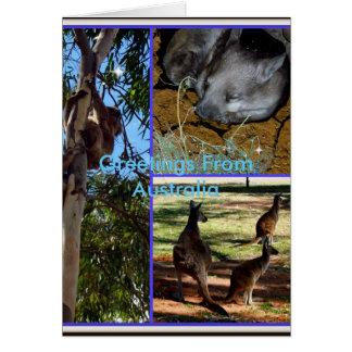 Cartão Australiano Animal_Collage,
