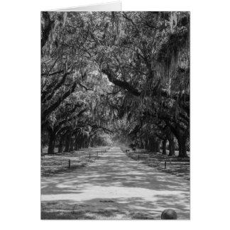 Cartão Avenida do Grayscale dos carvalhos