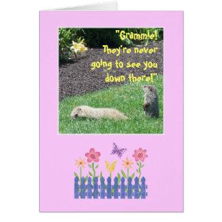 Cartão Avó feliz do aniversário de Groundhog!