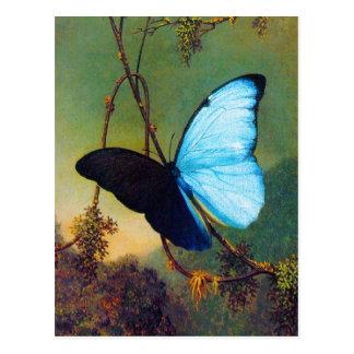 Cartão azul da borboleta de Morpho