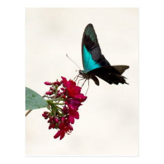 Cartão azul da borboleta de Swallowtail da