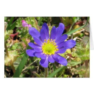 Cartão azul da flor