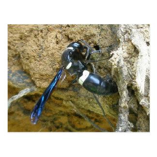 Cartão azul da vespa do Dauber de lama Cartão Postal