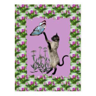 Cartão azul das margaridas da borboleta do gato