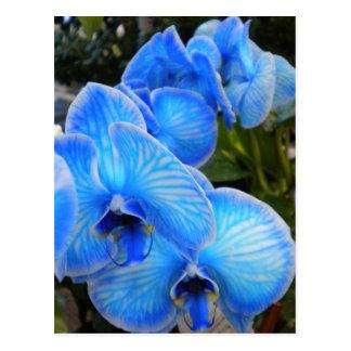 Cartão azul das orquídeas da mística