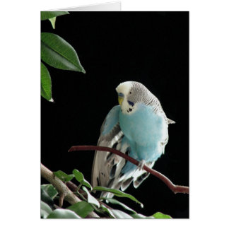Cartão azul de Budgie, cartão do Parakeet