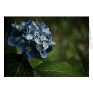 Cartão azul do Hydrangea 8519