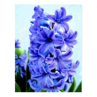 Cartão azul do jacinto