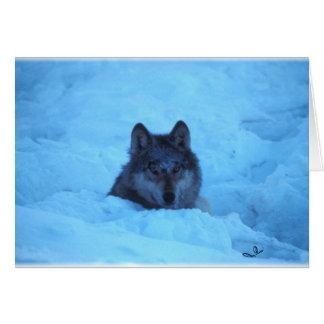 Cartão azul do lobo de madeira da neve