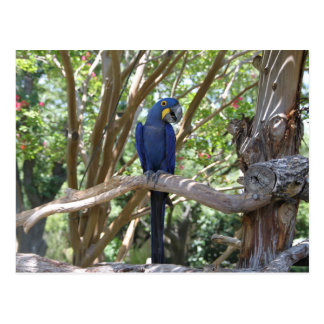 Cartão azul do papagaio