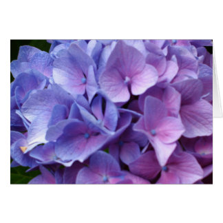 Cartão azul dos Hydrangeas
