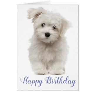 Cartão Azul maltês branco do cão de filhote de cachorro
