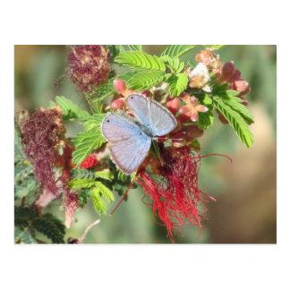 Cartão azul marinho da borboleta cartoes postais