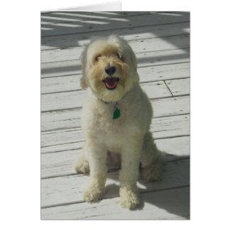 Cartão Bailey o cão bonito que levanta na plataforma -