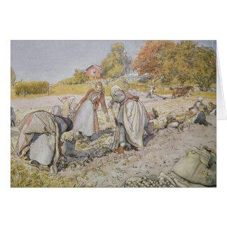 Cartão Batata de escavação, 1905