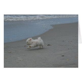 Cartão Bebê da praia