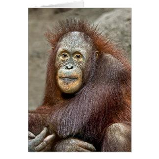Cartão Bebê do orangotango