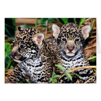 Cartão Bebê Jaguar Cubs