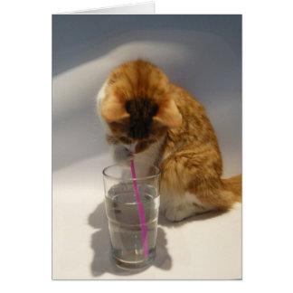 Cartão Bebendo bonito do gato do feliz aniversario da
