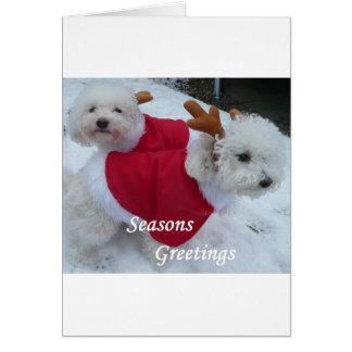 Cartão Bebês da neve
