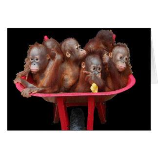 Cartão Bebês do orangotango dos trabalhos sujos