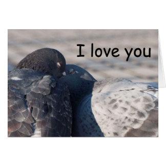 Cartão Beijando pombos