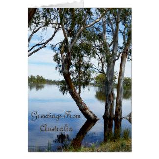 Cartão Beleza de uma árvore de goma Riverland Austrália,