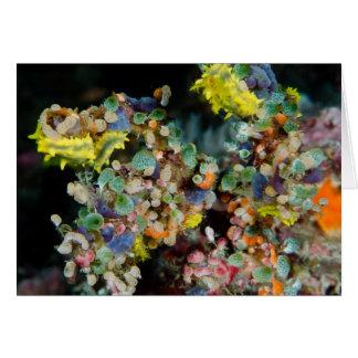 Cartão Beleza subaquática