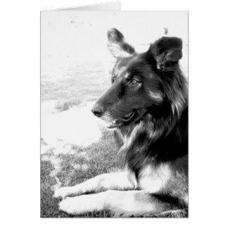 Cartão belga do cão de pastor do dia dos pais