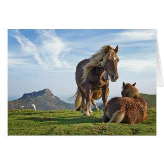 Cartão bianditz/cavalos islandêses
