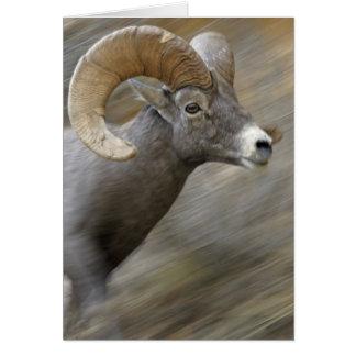 Cartão Bighorn Running do deserto