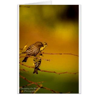 Cartão Birds of a Feather
