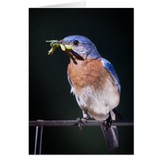 Cartão bluebird2