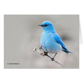 Cartão Bluebird bonito da montanha