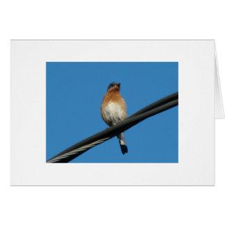 Cartão Bluebird, desejando lhe um dia da felicidade
