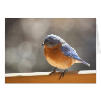Cartão Bluebird Notecard - vazio para dentro