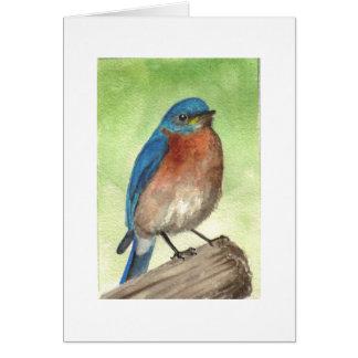 Cartão Bluebird oriental