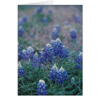 Cartão Bluebonnets
