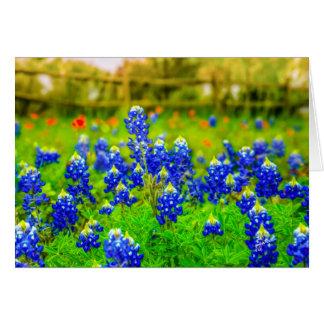 Cartão Bluebonnets de Texas