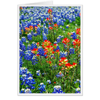 Cartão Bluebonnets, Texas
