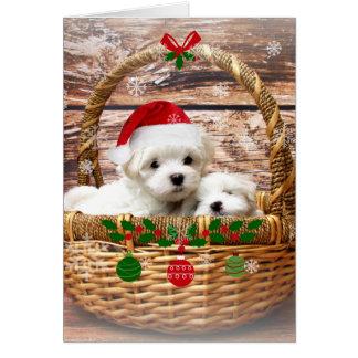 Cartão Boas festas: Filhotes de cachorro malteses