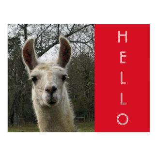 """Cartão bonito brilhante do lama de N """"olá!"""""""