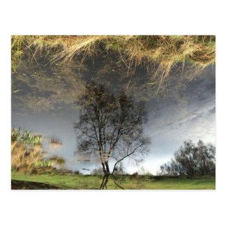 Cartão bonito da árvore da fotografia da reflexão