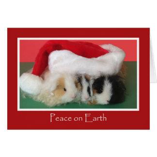 Cartão bonito da cobaia do Natal
