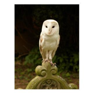 Cartão bonito da coruja de celeiro