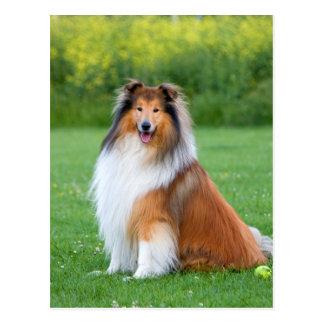 Cartão bonito da foto do cão áspero do Collie