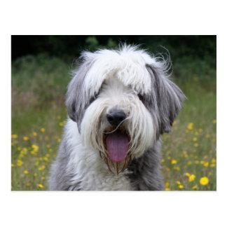 Cartão bonito da foto do cão farpado do Collie